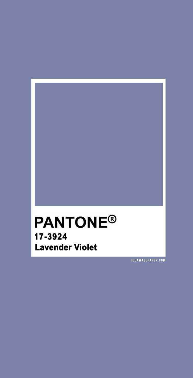 60 Pantone Color Palettes : Pantone Lavender Violet 17-3924