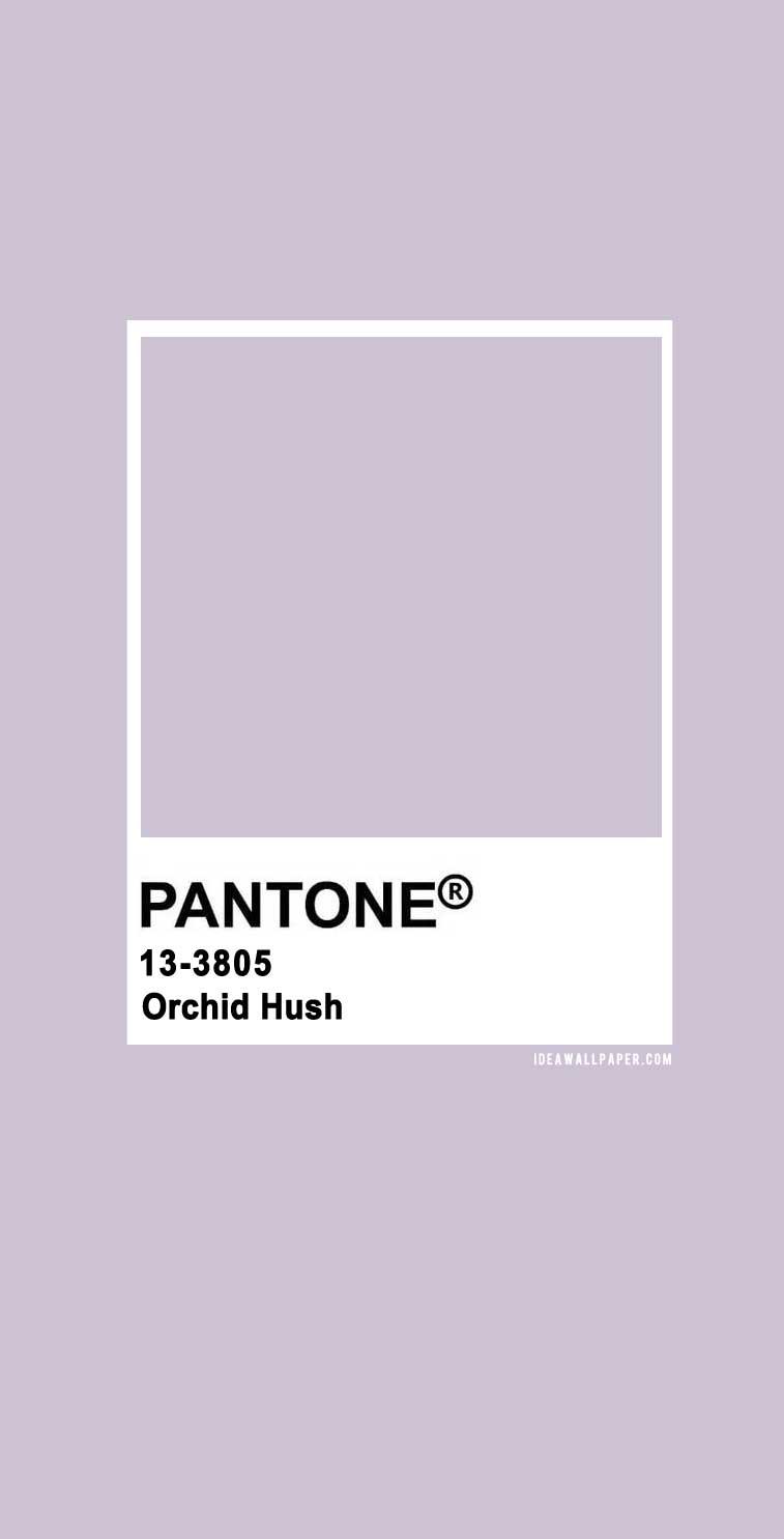Pantone Orchid Hush 13-3805