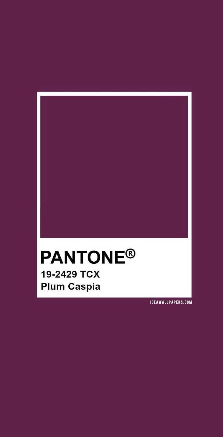 60 Pantone Color Palettes :  Pantone Plum Caspia : Pantone 19-2429