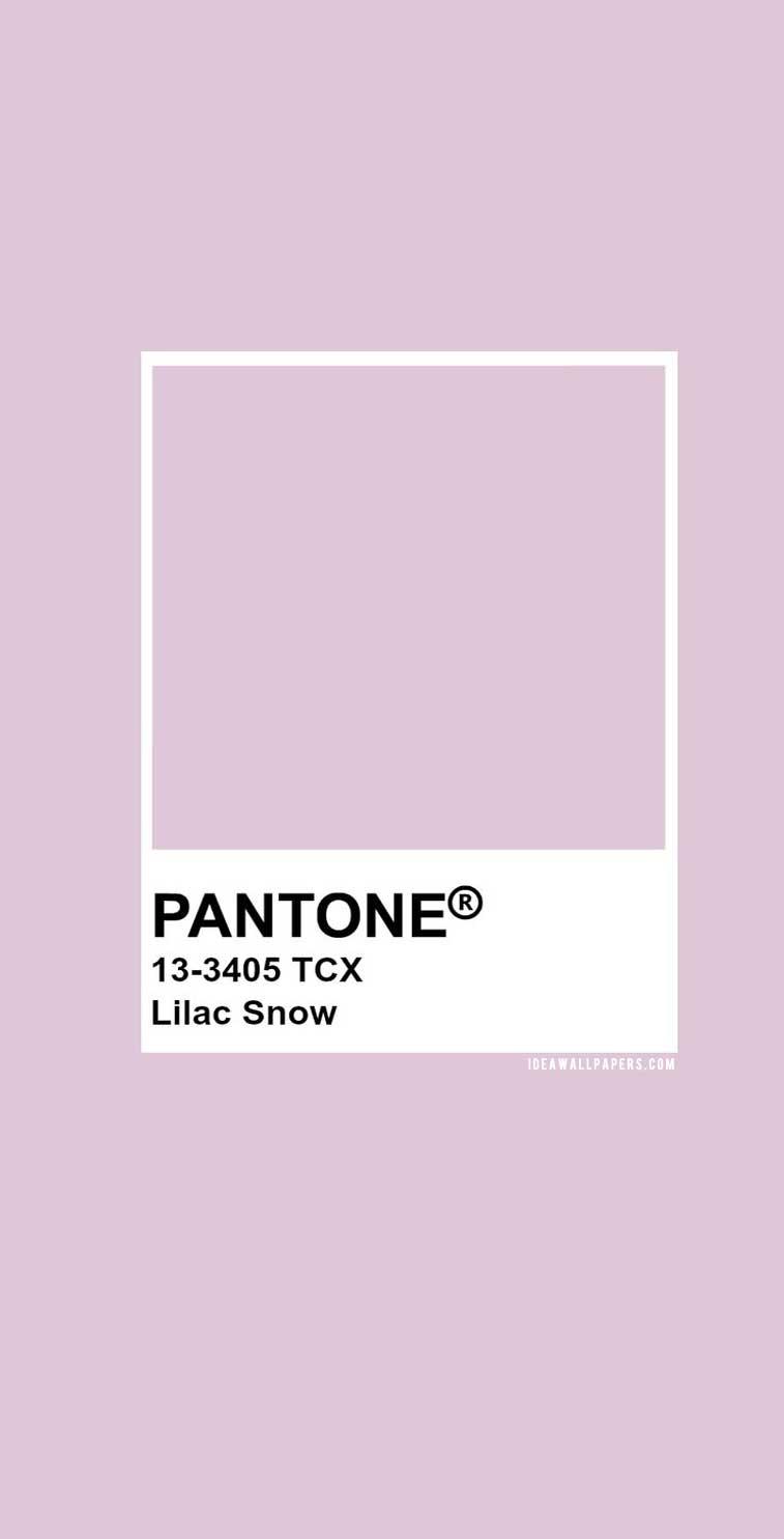60 Pantone Color Palettes :  Pantone Lilac Snow : Pantone 13-3405