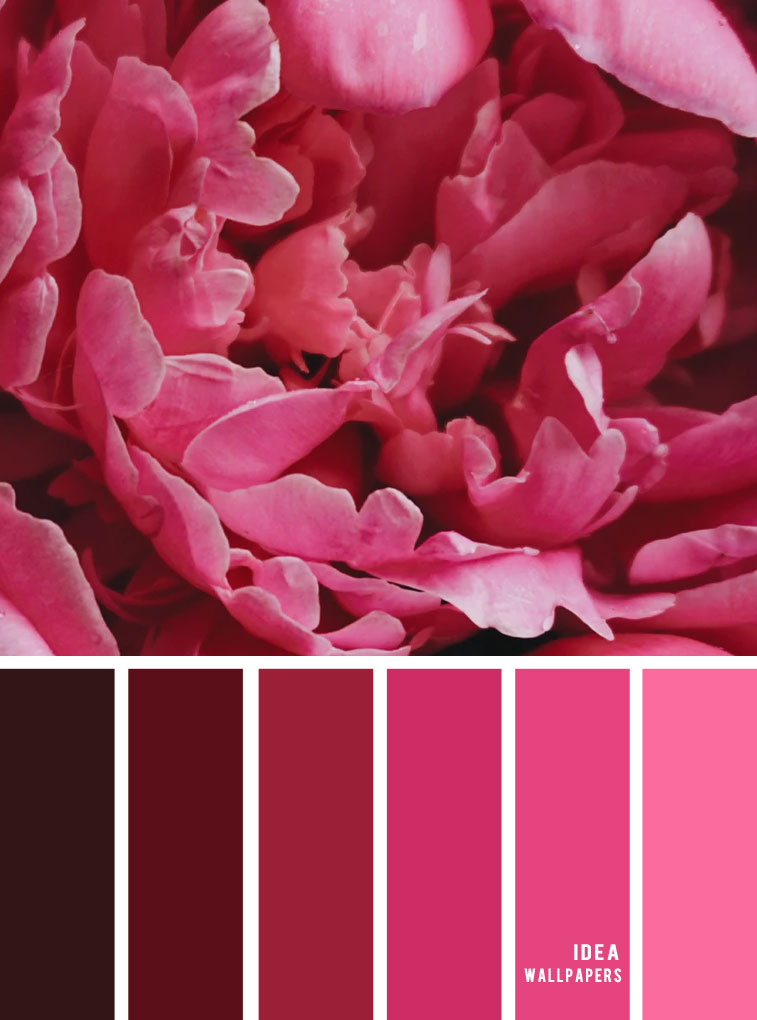 Color Inspiration : Pink Color Palette