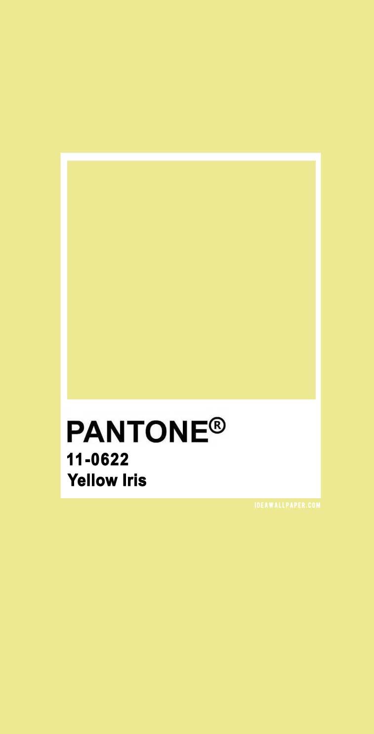 Pantone Yellow Iris 11-0622