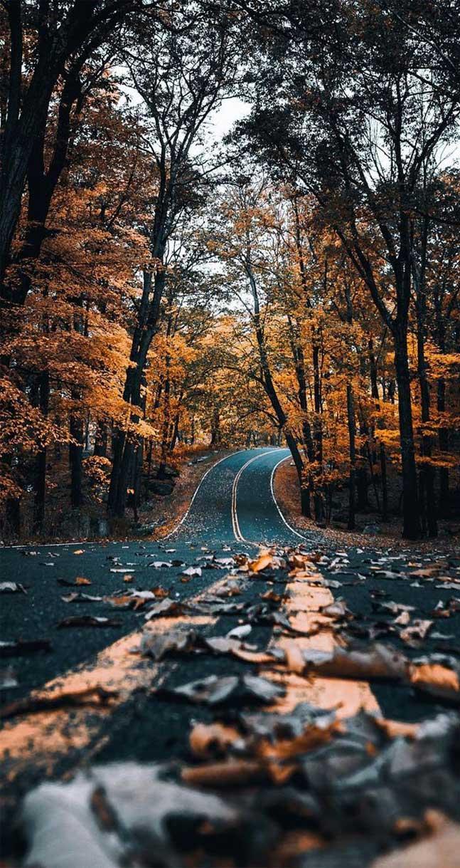 22 Beautiful autumn Images