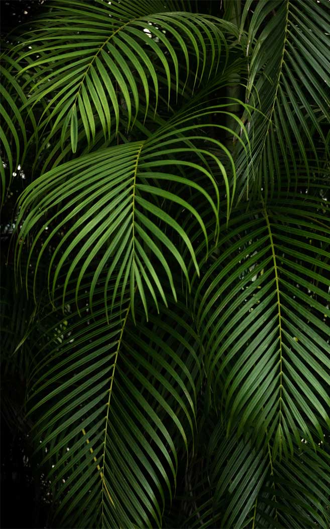 Green Leaves Iphone Wallpaper Idea Wallpapers Iphone Wallpapers Color Schemes