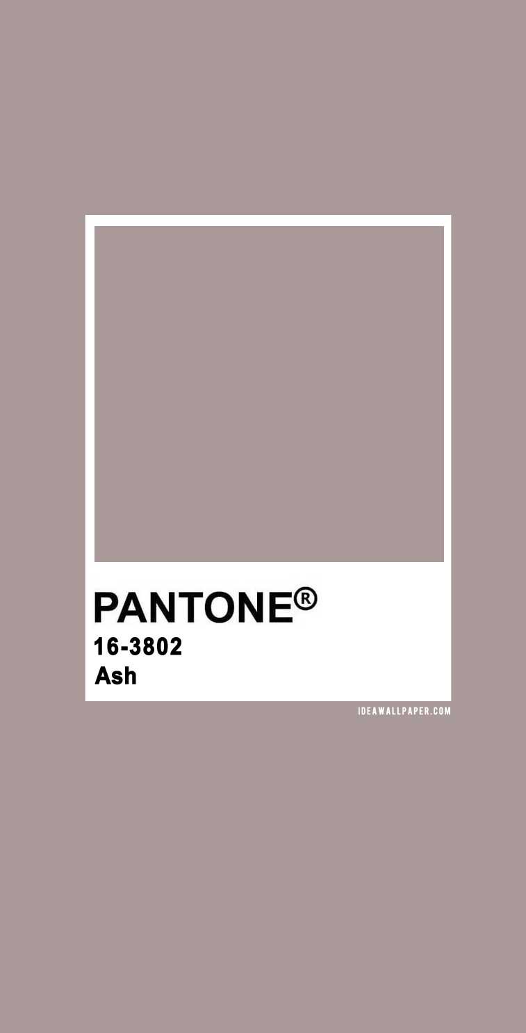 Pantone 2020 Spring/Summer : Ash 16-3802