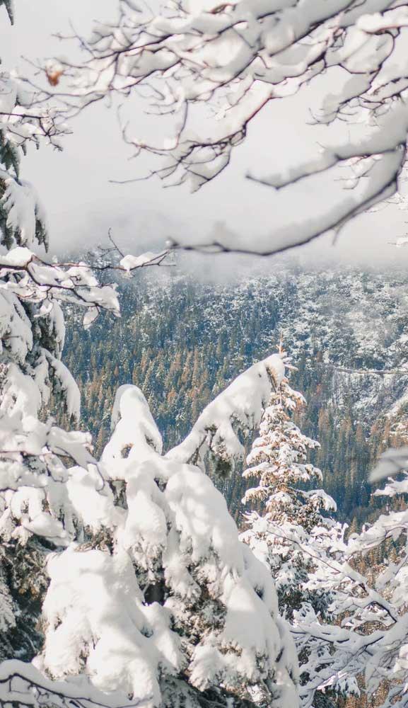 Beautiful Winter Iphone Wallpaper 2