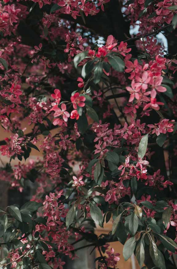 42 Pretty Blossom IPhone Wallpapers – Page 20