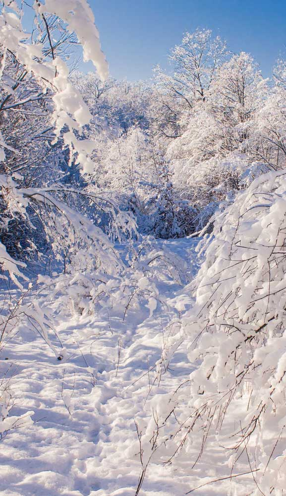 Beautiful Winter Iphone Wallpaper 3