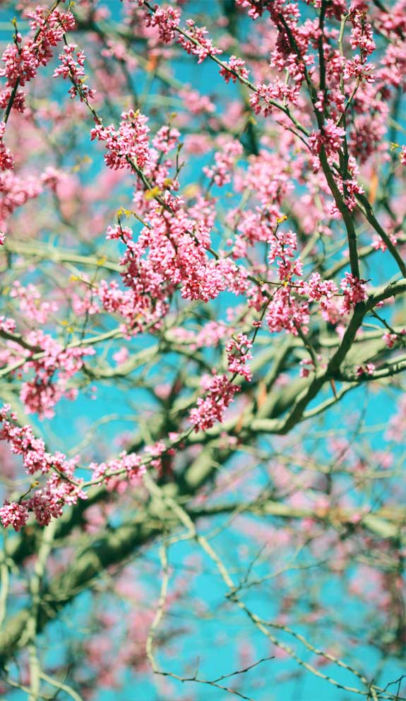 42 Pretty Blossom IPhone Wallpapers – Page 21