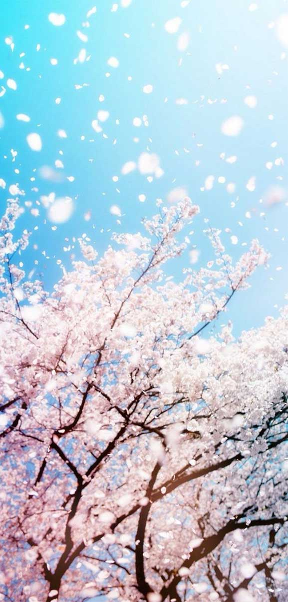 42 Pretty Blossom IPhone Wallpapers – 33