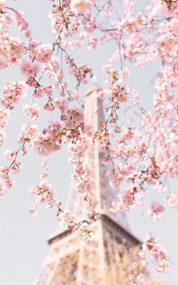 42 Pretty Blossom IPhone Wallpapers – 37