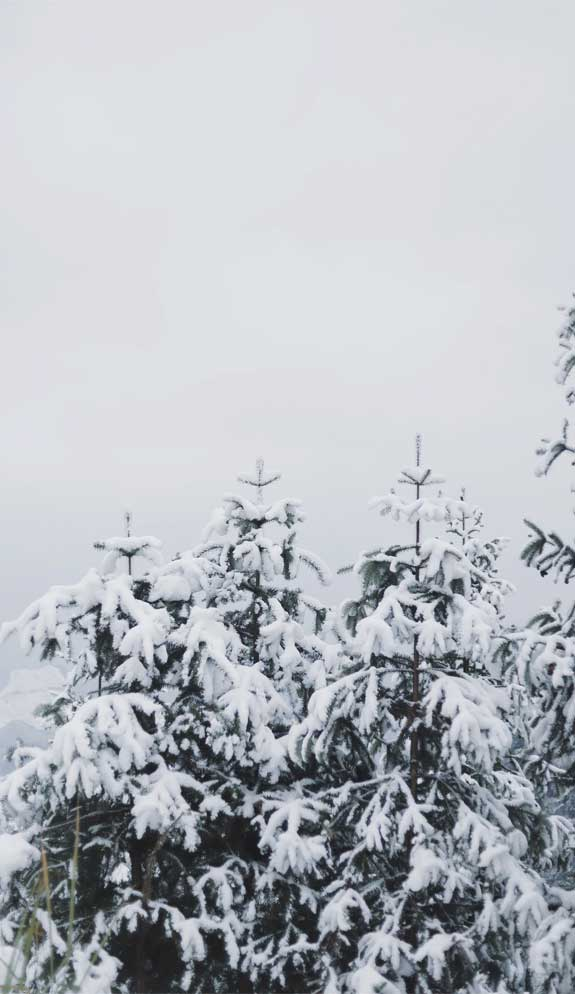 Beautiful Winter Iphone Wallpaper 9