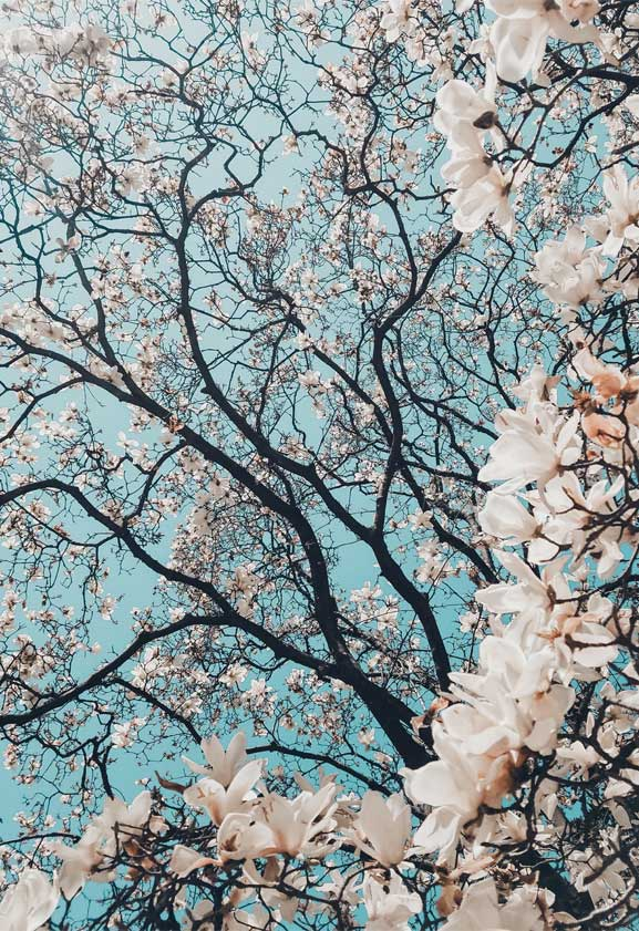 42 Pretty Blossom IPhone Wallpapers – Page 10