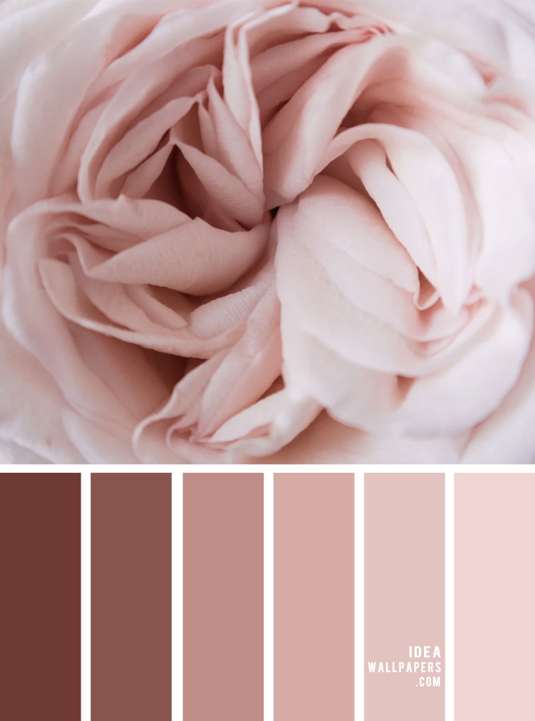 Mauve and Blush Color Palette