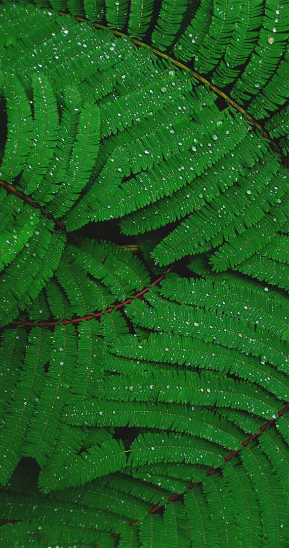 Leaf iPhone Wallpaper