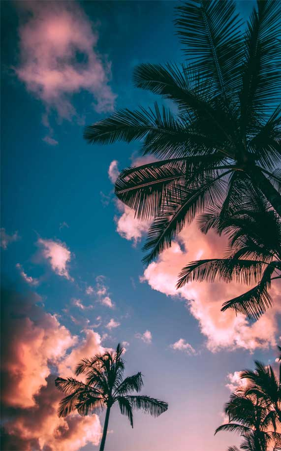 Silhouette of Palm Trees under blue sky