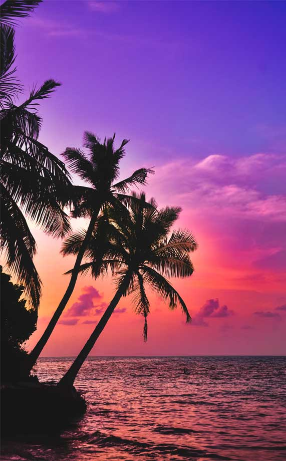 Silhouette of Palm Trees under pink purple sky