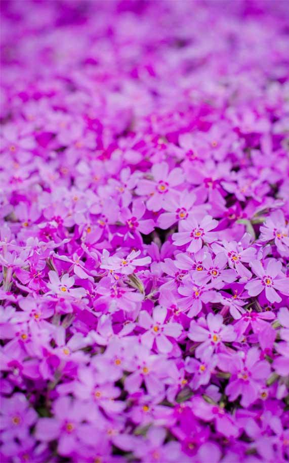 Bright pink purple flowers