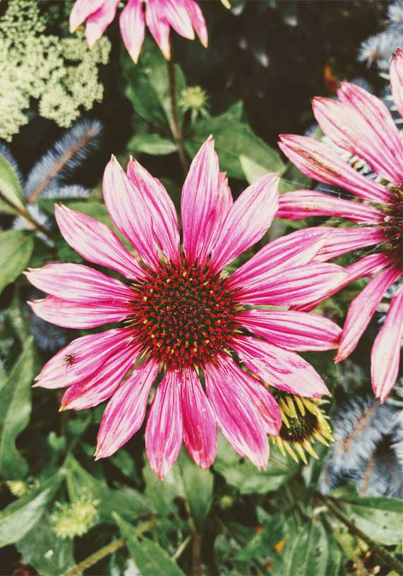 Flower iPhone Wallpaper