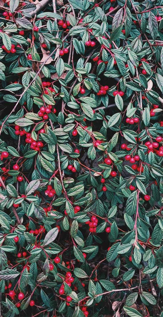 Leaf Iphone Wallpaper