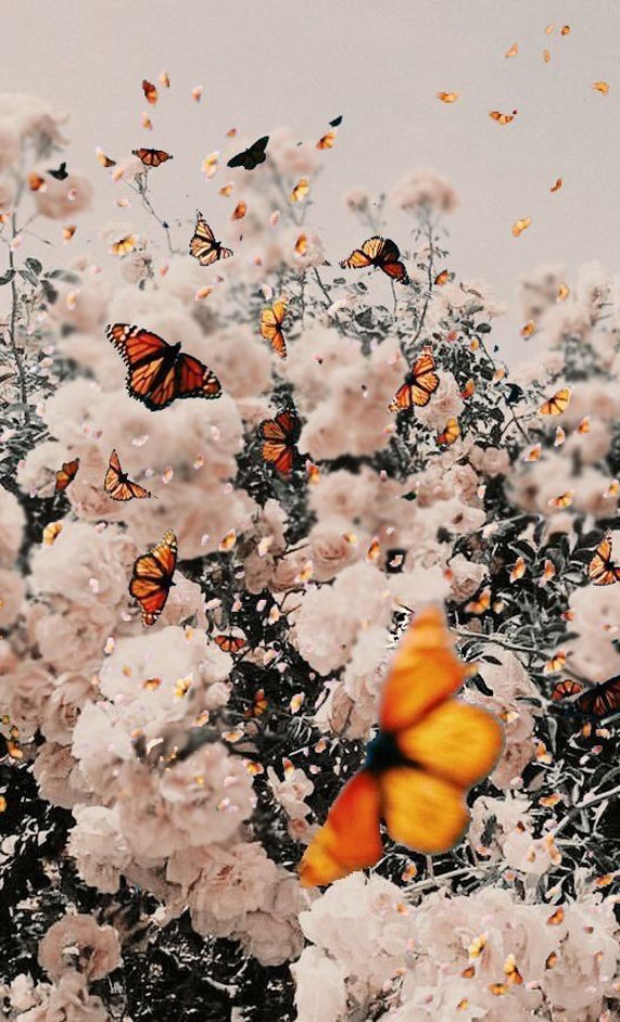 Butterflies And Flowers Iphone Lockscreen Idea Wallpapers Iphone Wallpapers Color Schemes