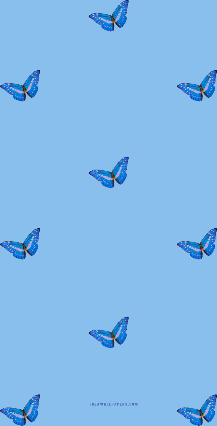 Butterfly on Blue background wallpaper