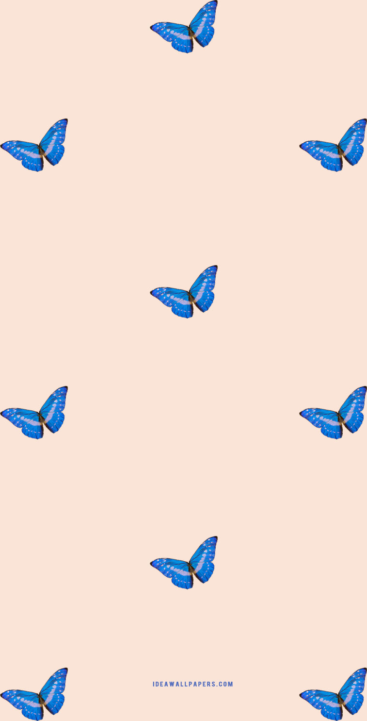 Butterfly on pink peach background