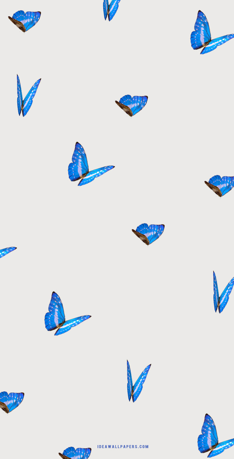Blue Butterflies on grey background