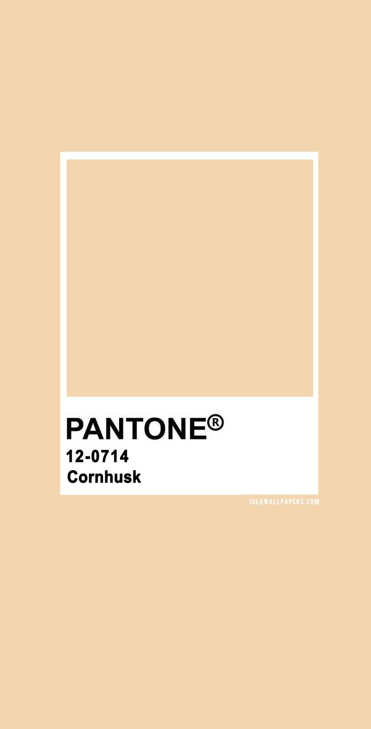 Pantone Cornhusk  : Pantone 12-0714 TCX Cornhusk