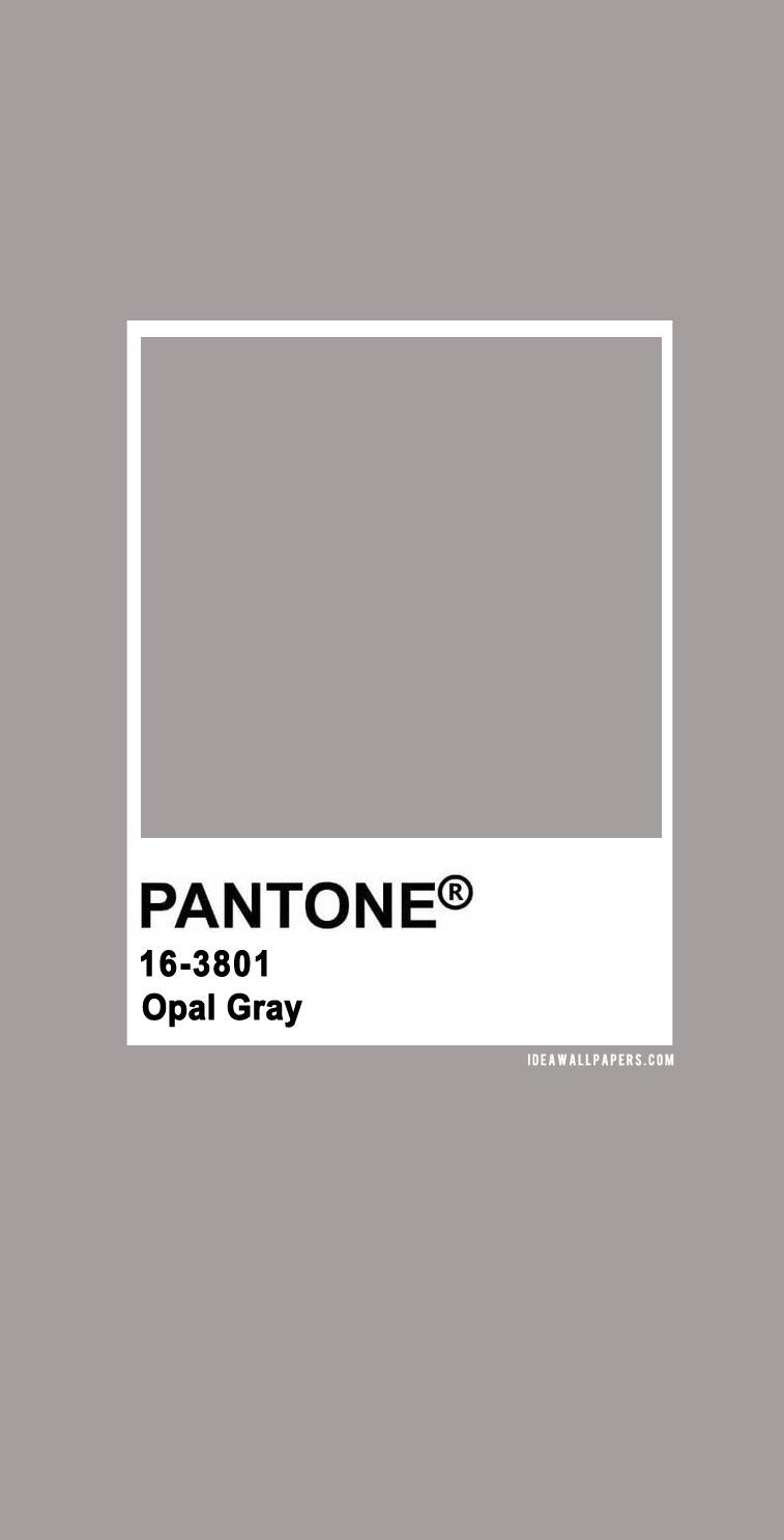 Pantone Opal Gray  : Pantone 16-3801 Opal Gray