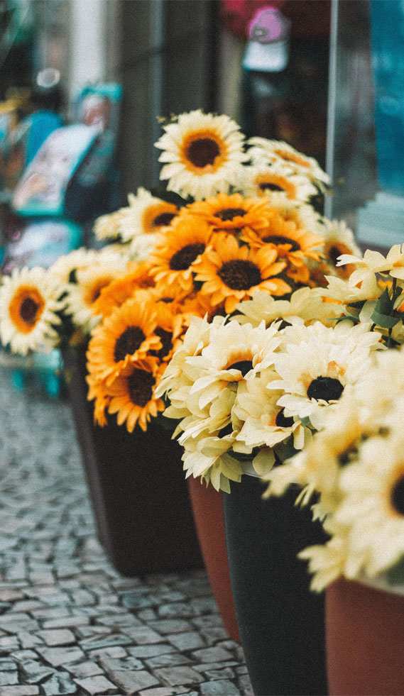 Sunflowers – Wallpaper iphone