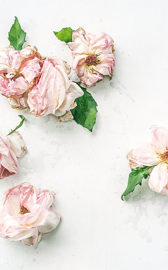 Dried Roses iphone wallpaper